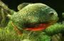 3D Fish Aquarium для Андроид скачать бесплатно
